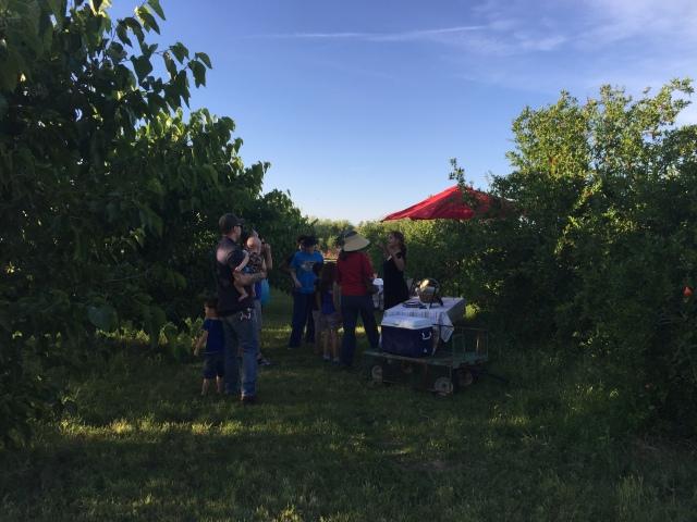 Holiday Farms 2016