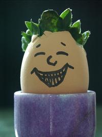 mr-egghead-1528485